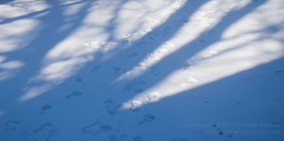 Snow Shadows  -  digital photograph © Amy Funderburk 2014 All Rights Reserved