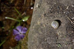 The Purple Spiral