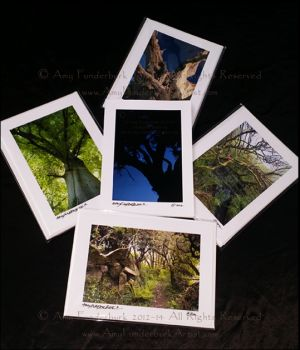 The Trees of England and Cornwall Greeting Card Collection. Archival pigment prints on card stock, © 2012-14 Amy Funderburk, All Rights Reserved