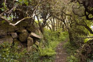 Path from the Sancreed Holy Well