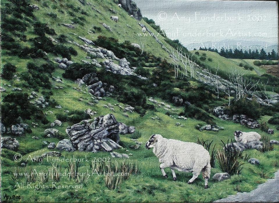 Carrowkeel Sheep