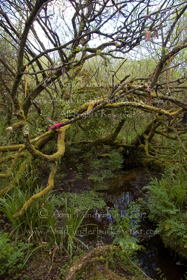 The Wild Trees of Madron